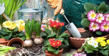 Trois bonnes raisons de prendre soin des plantes ou des jardins